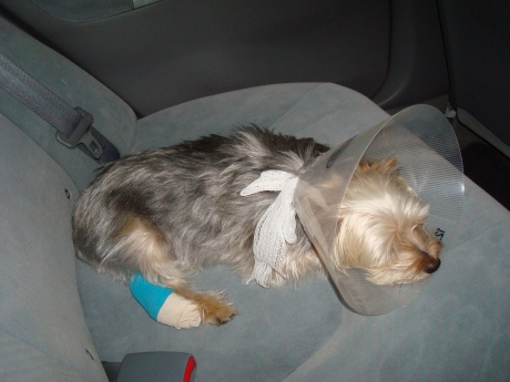 Our poor little guy crashed out on the way home